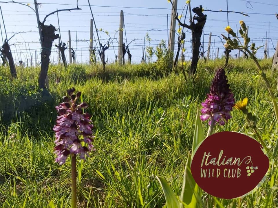 Best Natural Wine of our Italian Wild Club